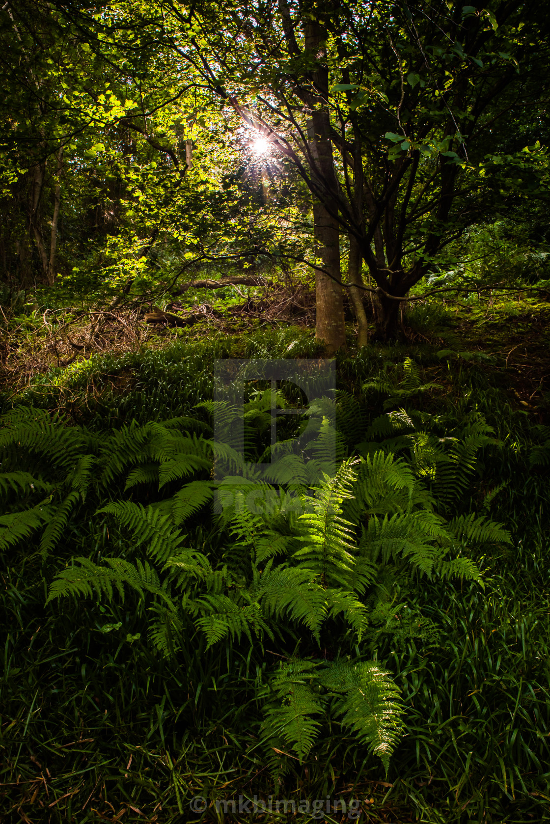 """Forest Sunshine"" stock image"