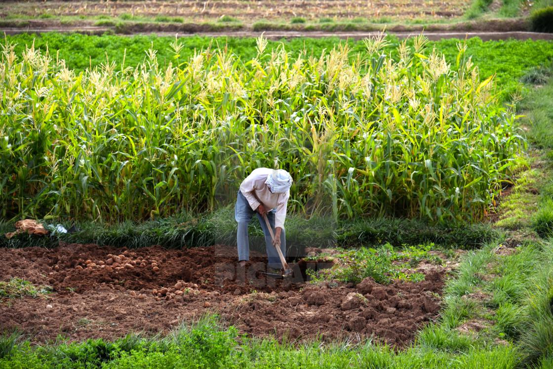 Self-sufficient labor-intensive farming in Morocco - License