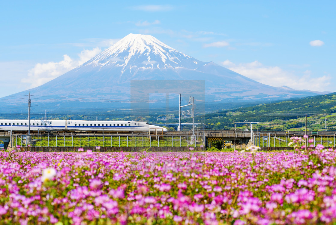 """Bullet train with Mt. Fuji"" stock image"