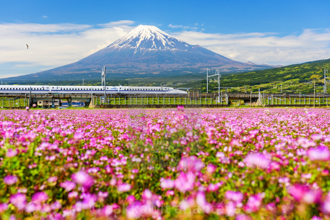 Shinkansen and Mt. Fujisan - License, download or print for £10.00 ...