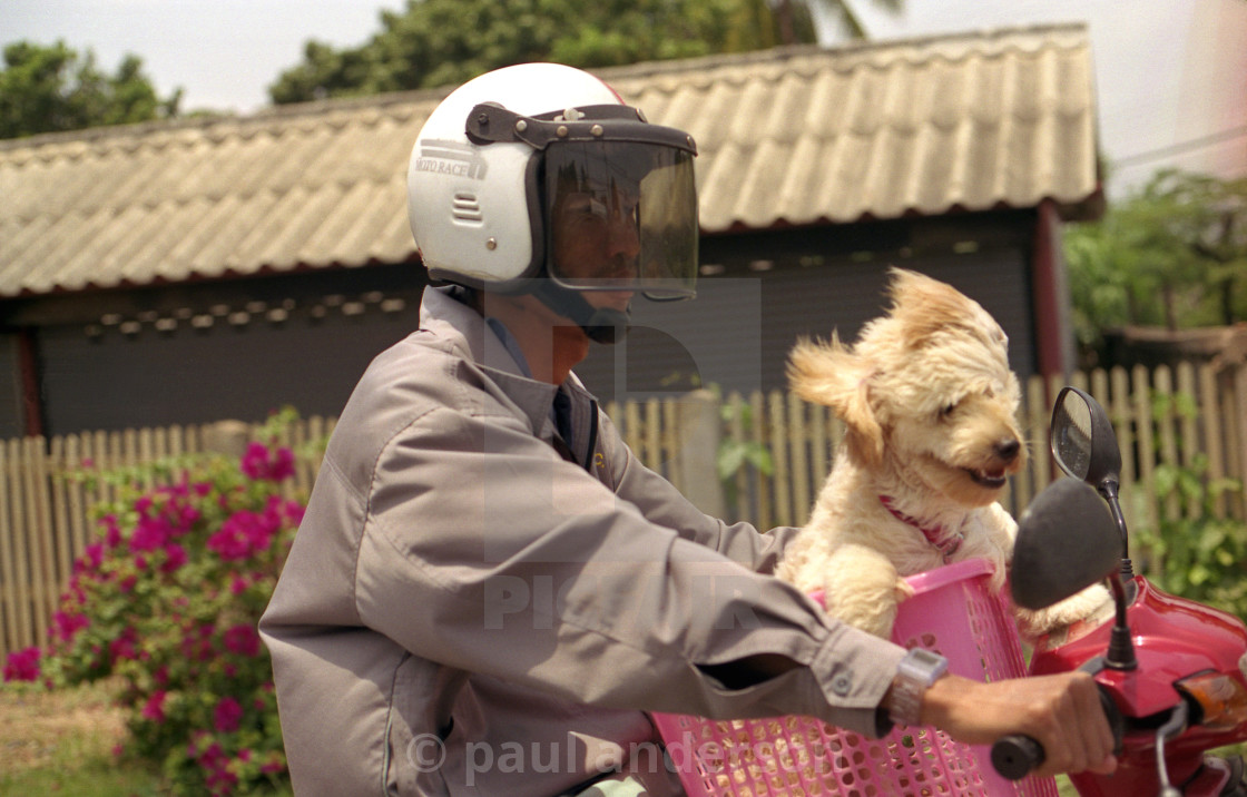 """A dog on a scooter in Thailand"" stock image"