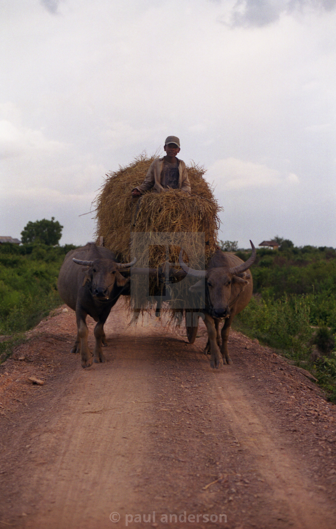 """Boy with bullock cart, Cambodia"" stock image"