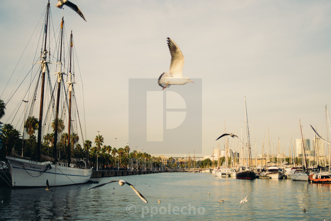 """Barcelona Port and Seagulls"" stock image"