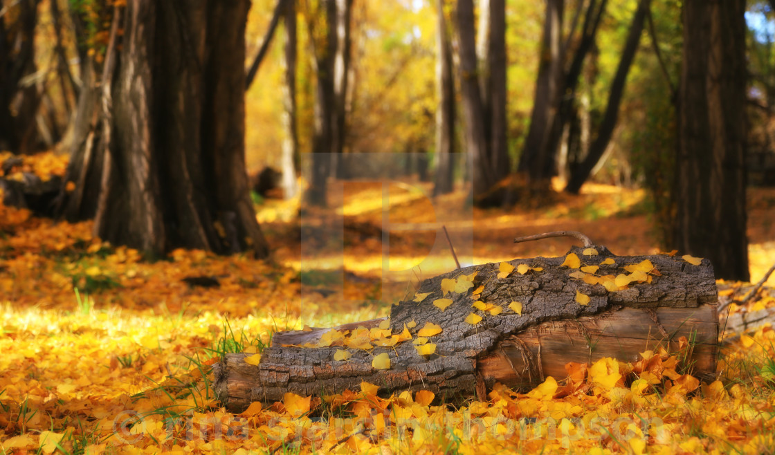 """autumn park"" stock image"
