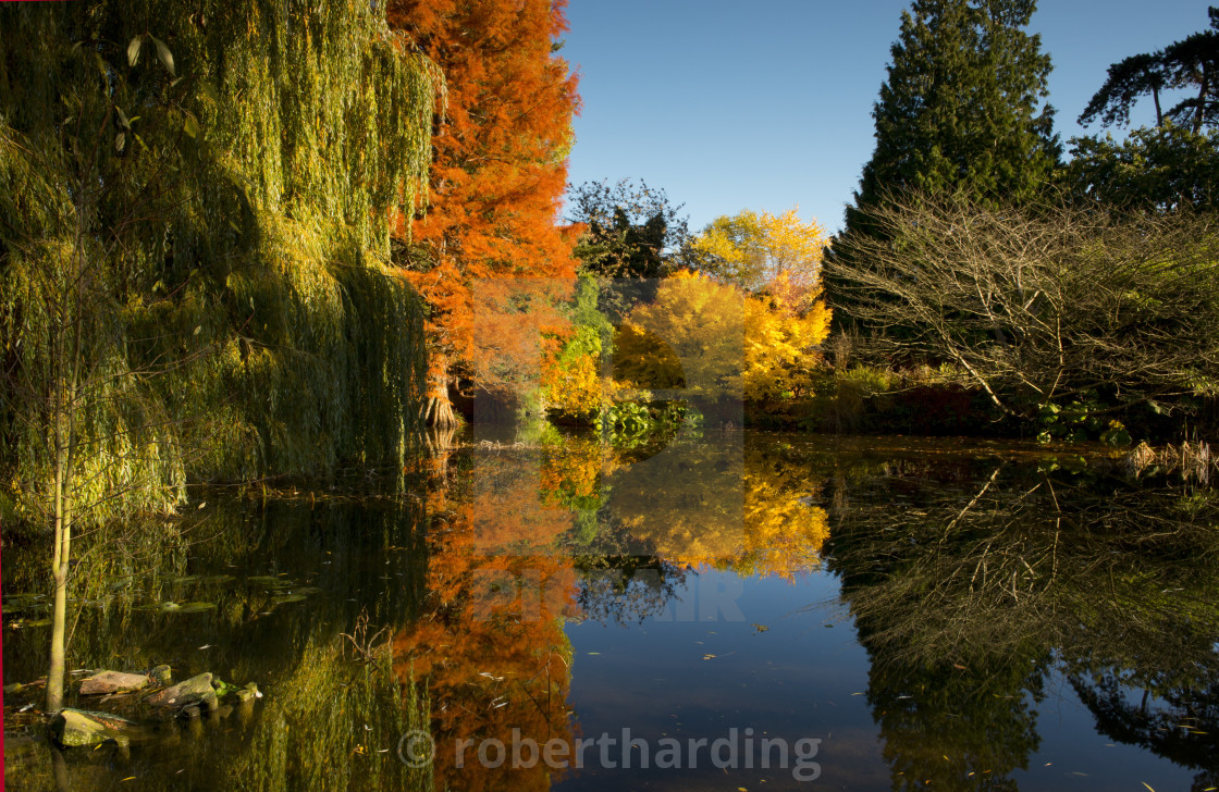 """Reflections of autumn foliage in the Bog Garden at the Cambridge Botanic..."" stock image"