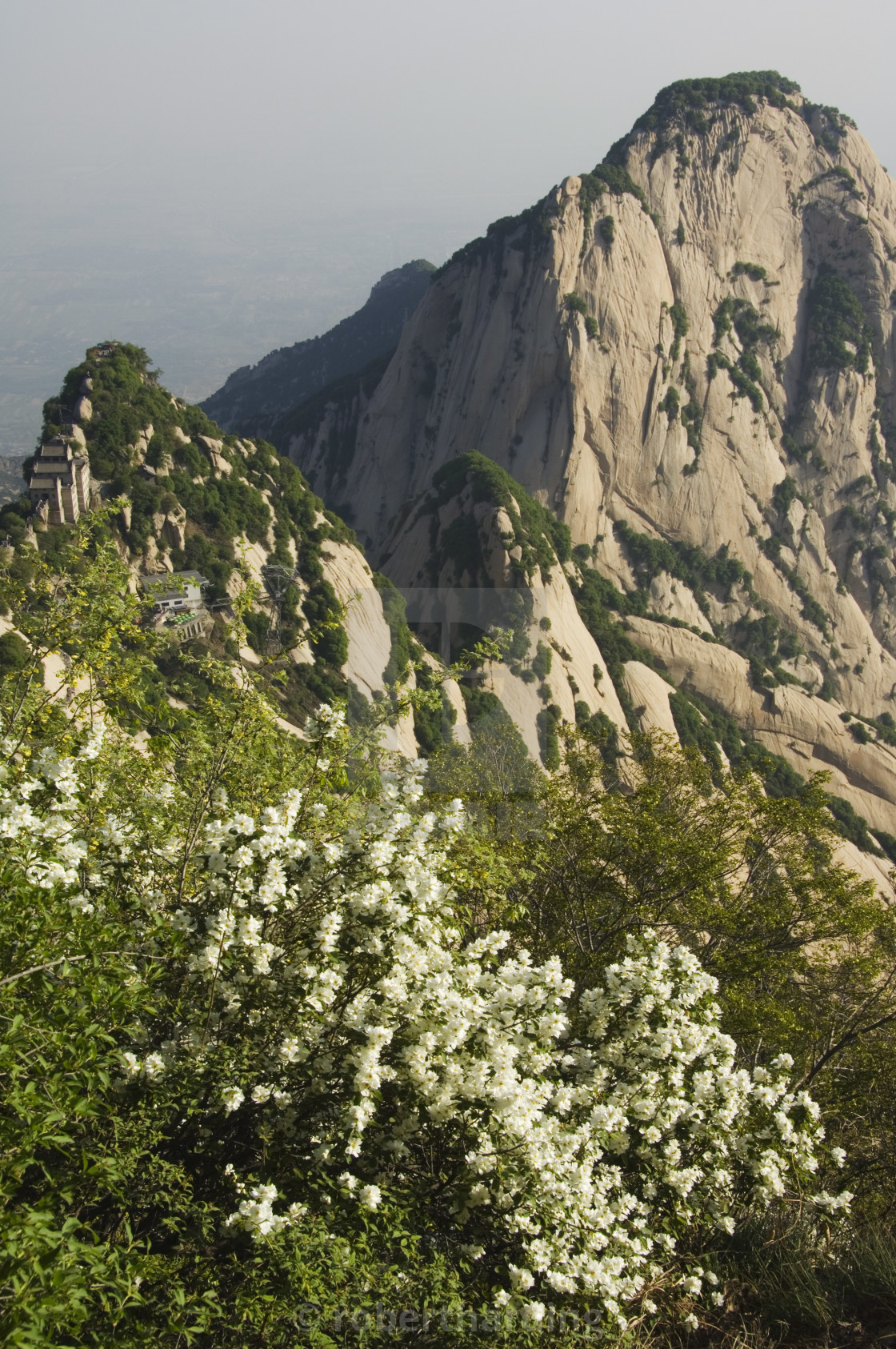 """Spring flowers on Hua Shan, a granite peaked mountain of 2160m, Shaanxi..."" stock image"