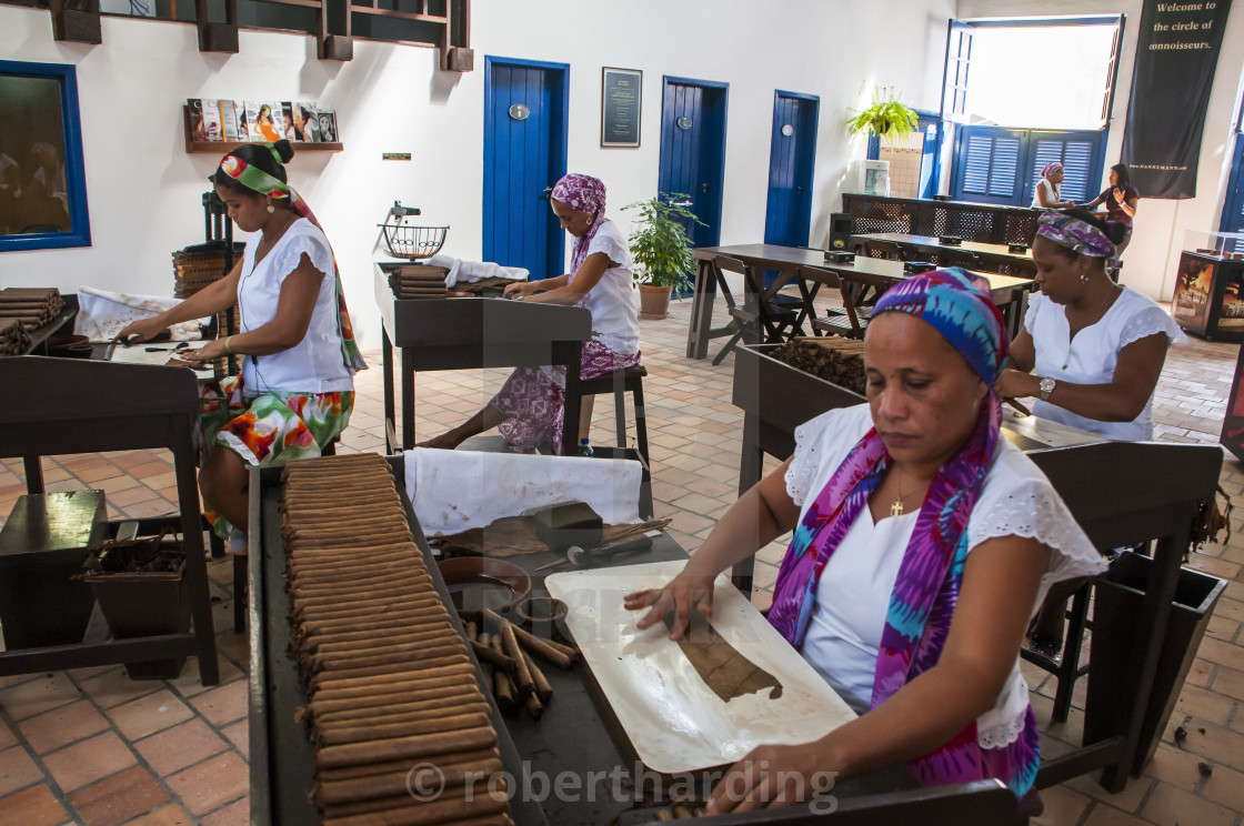 """Women rolling cigars in the Dannemann cigar company in Cachoeira, Bahia,..."" stock image"