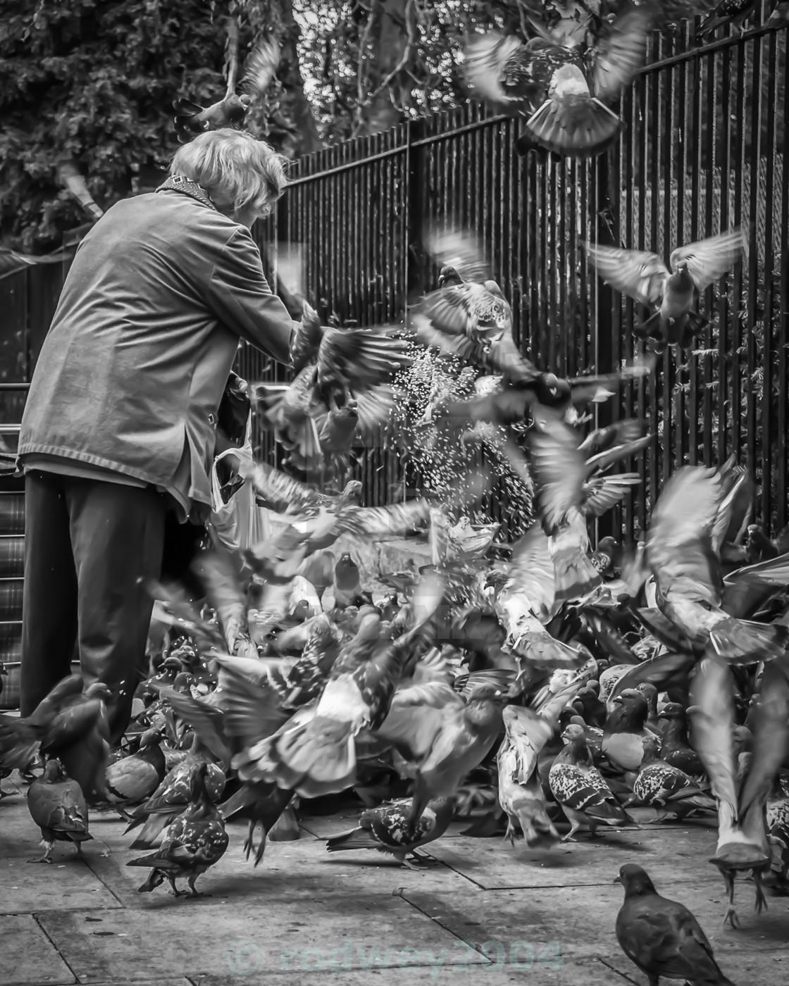 """The Bird Lady"" stock image"