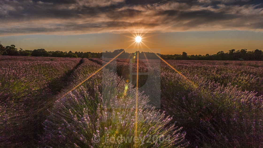 """""""Sunset Over The Fields"""" stock image"""