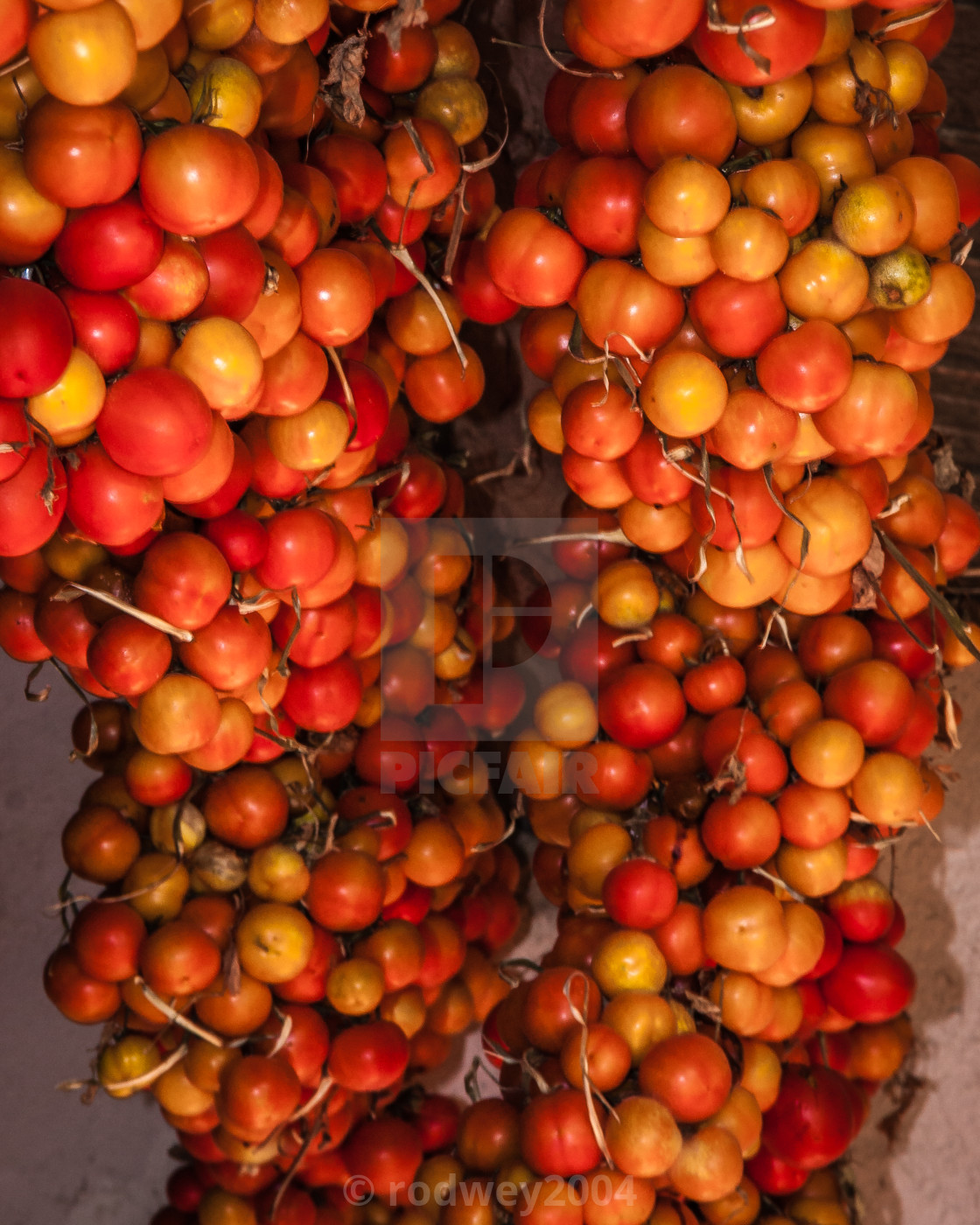 """Fresh tomatoes hanging on display."" stock image"