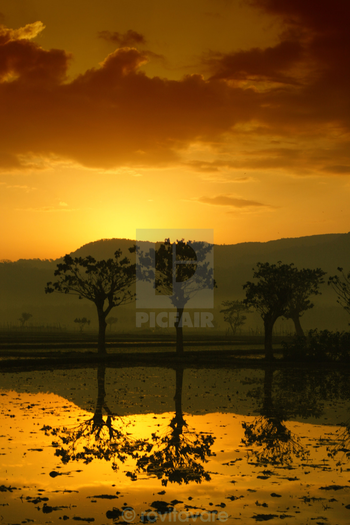 """""""Shades of Golden Morning"""" stock image"""