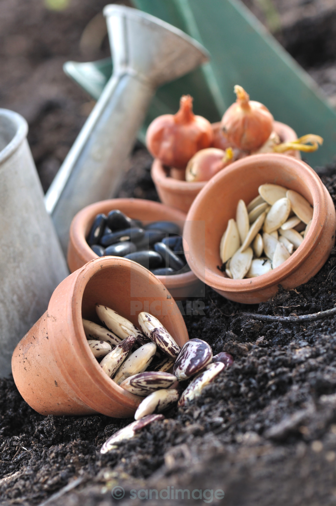 """""""seeds in pots to sowing"""" stock image"""