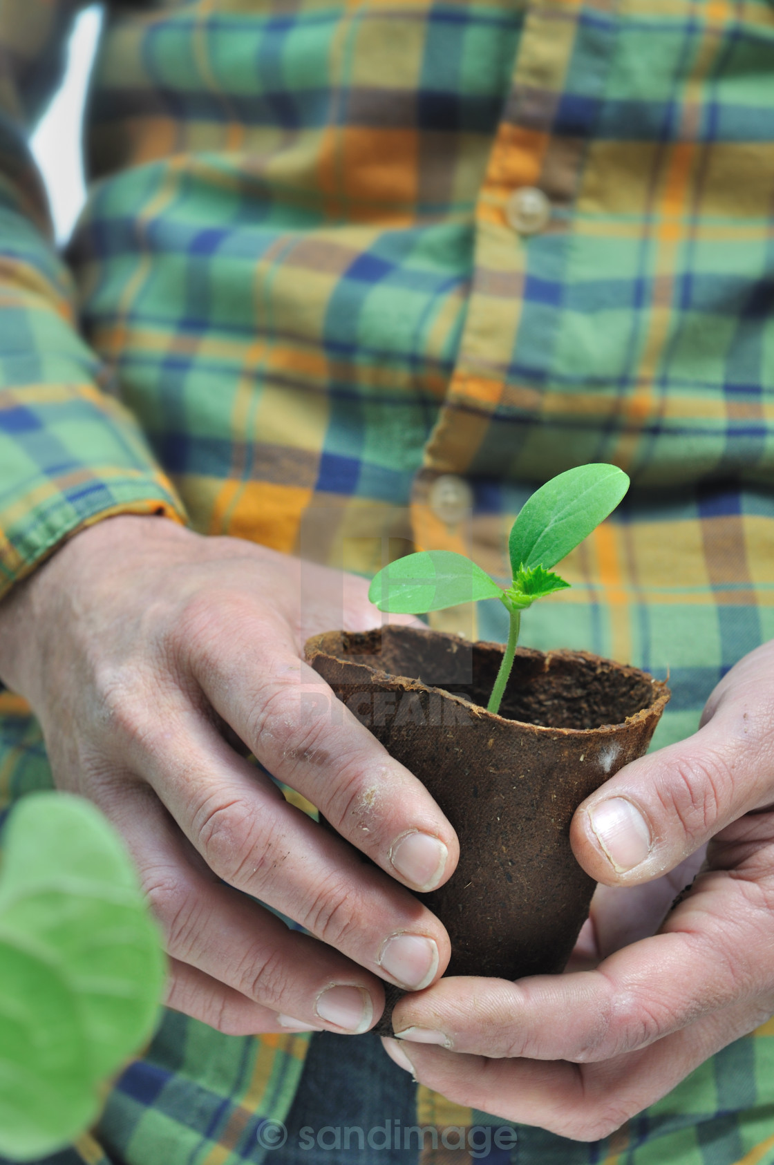 """gardener holding seedlings"" stock image"