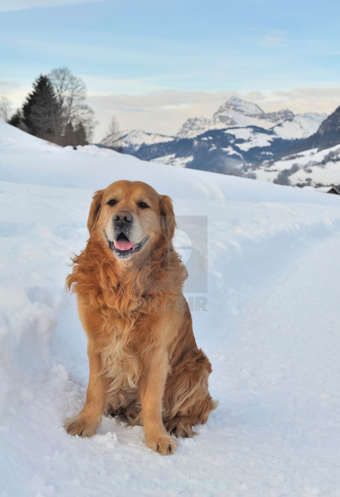 """dog in snow"" stock image"