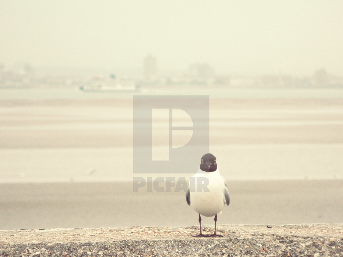 """Gazing gull"" stock image"