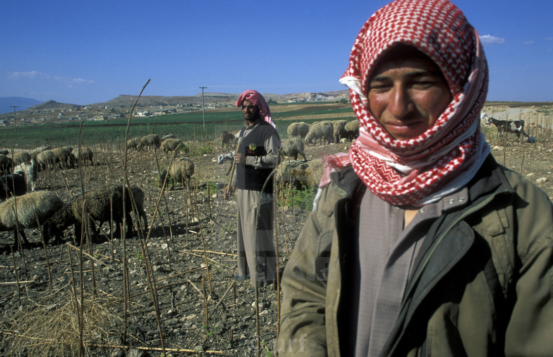 """""""MIDDLE EAST SYRIA ALEPPO FARMER"""" stock image"""