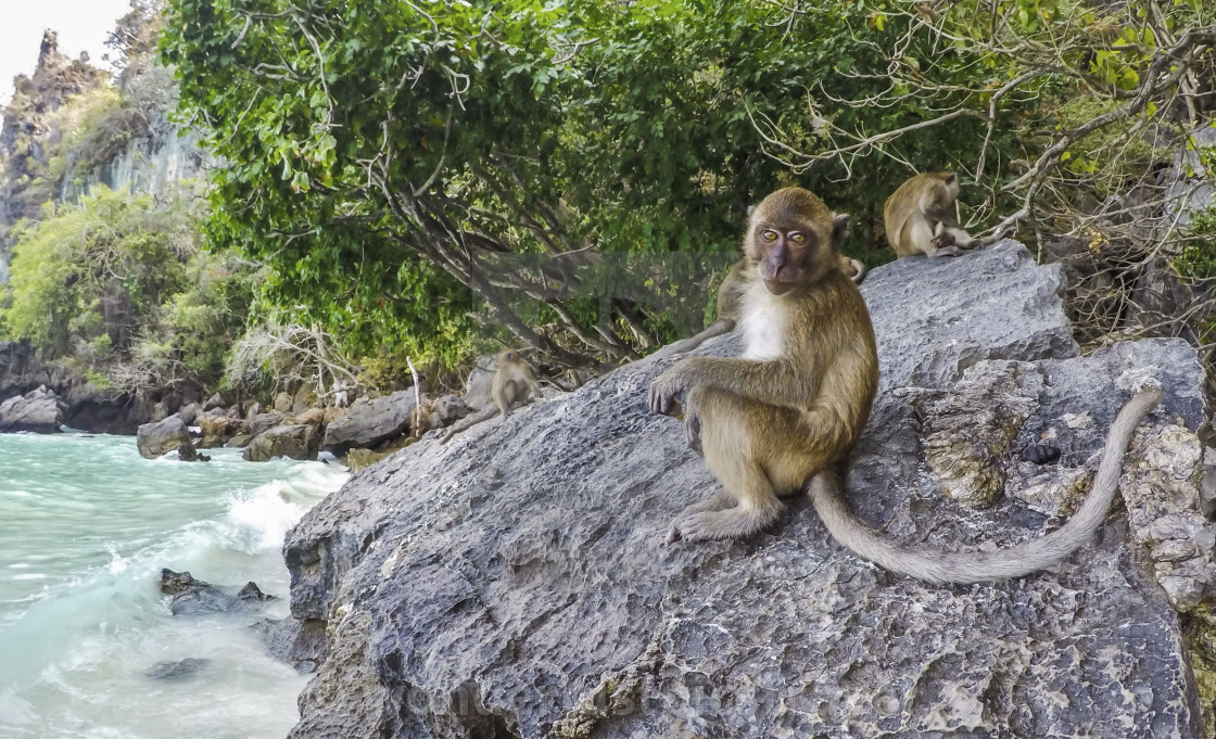 Monkeys At Monkey Beach Koh Phi Phi Island Thailand Asia
