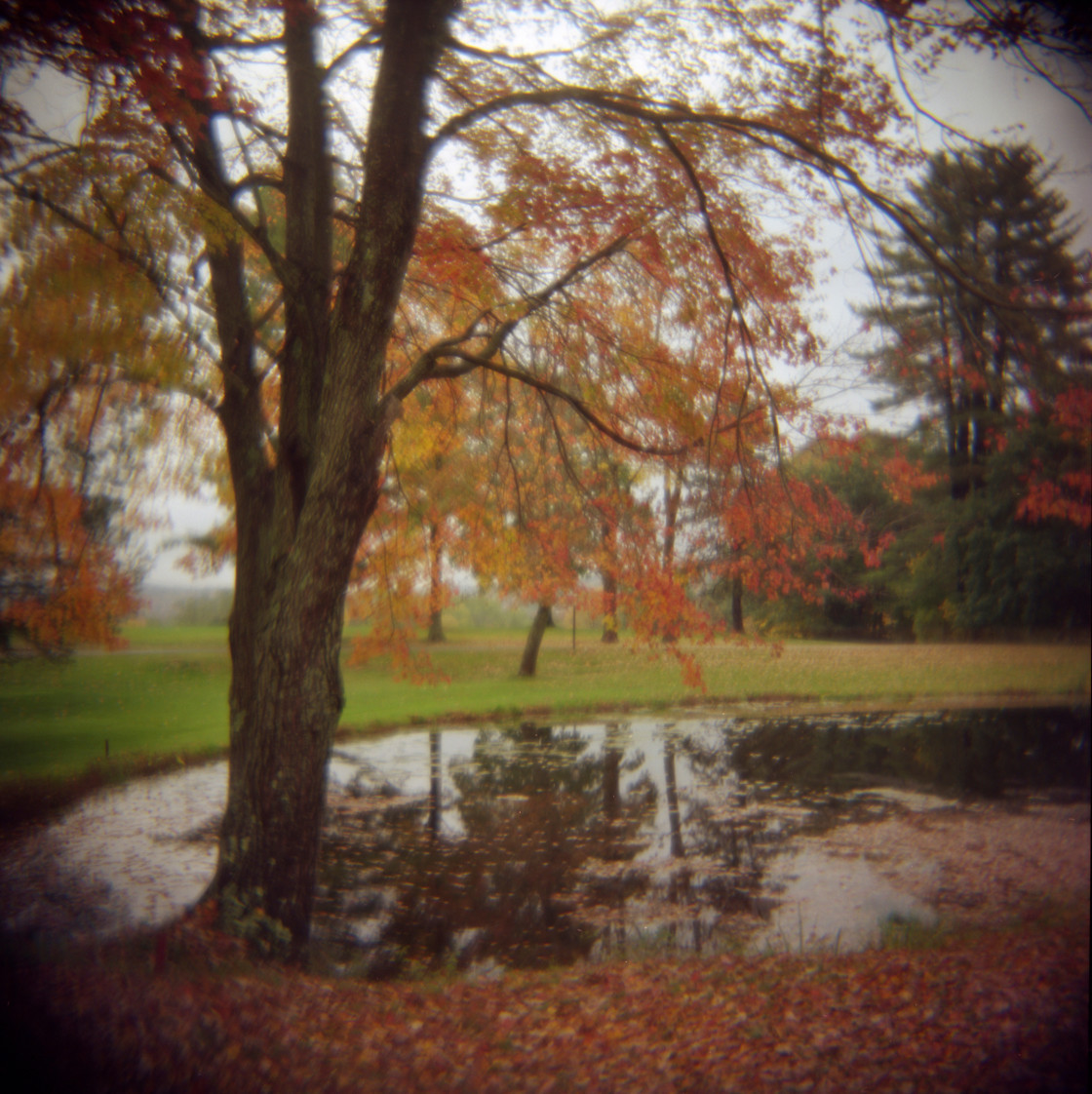 """Fall tree and pond."" stock image"