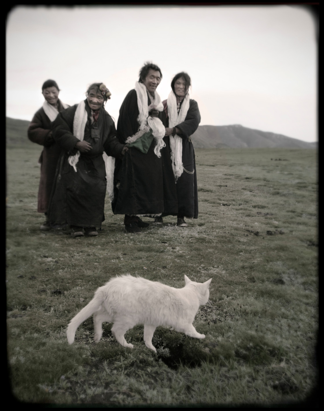 """Nomads with white cat , Tibert"" stock image"