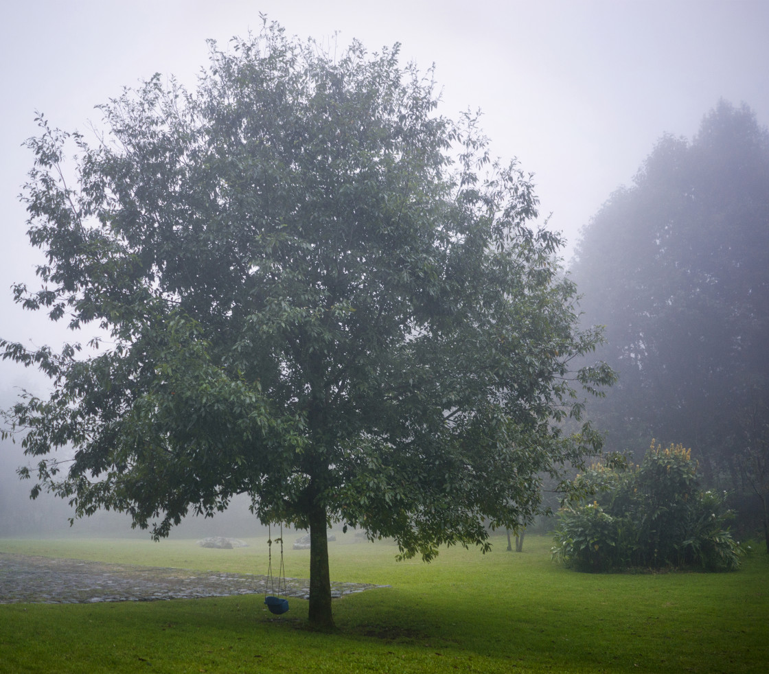 """Tree in Fog"" stock image"