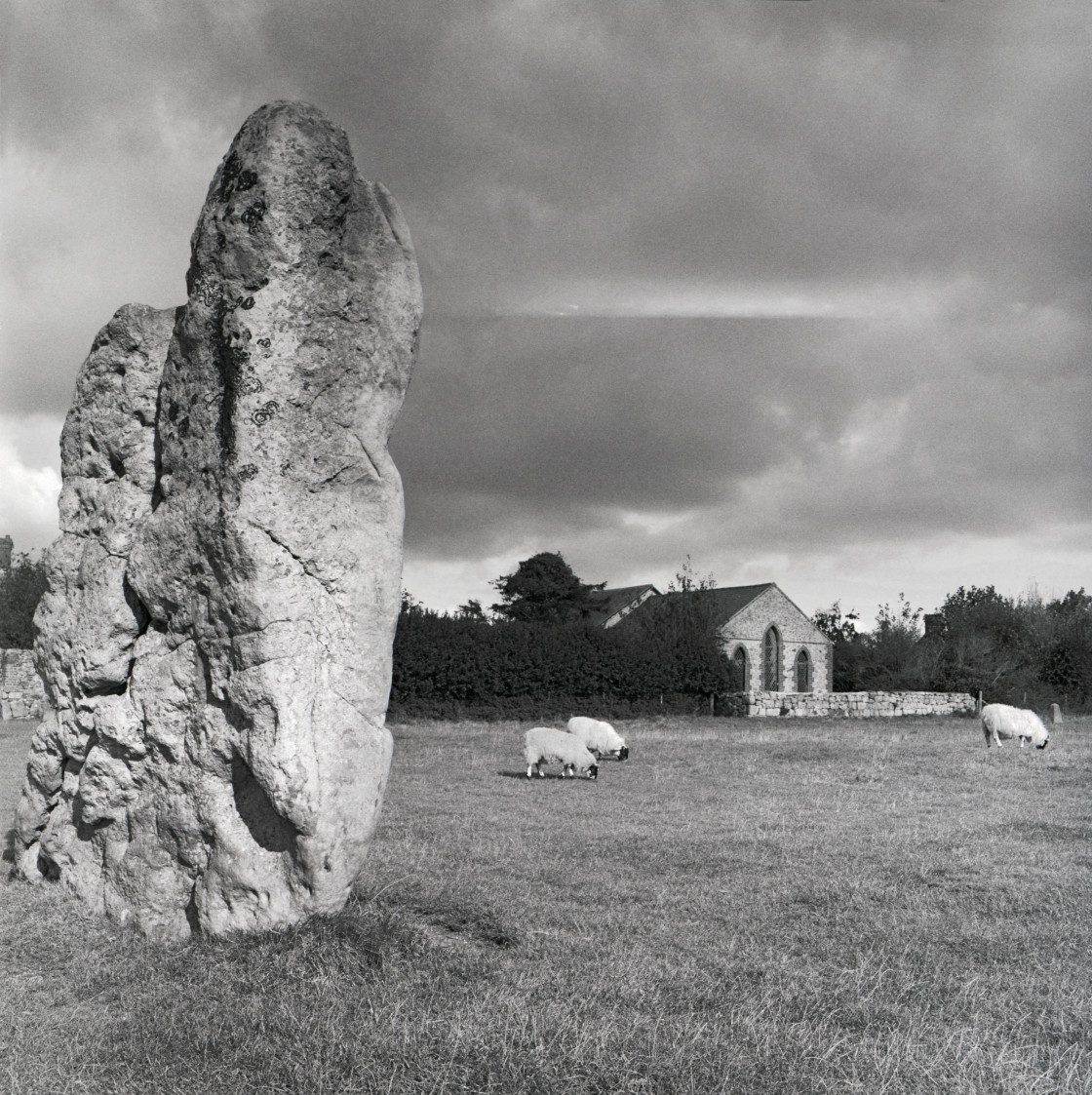 """Averbury stone and sheep"" stock image"