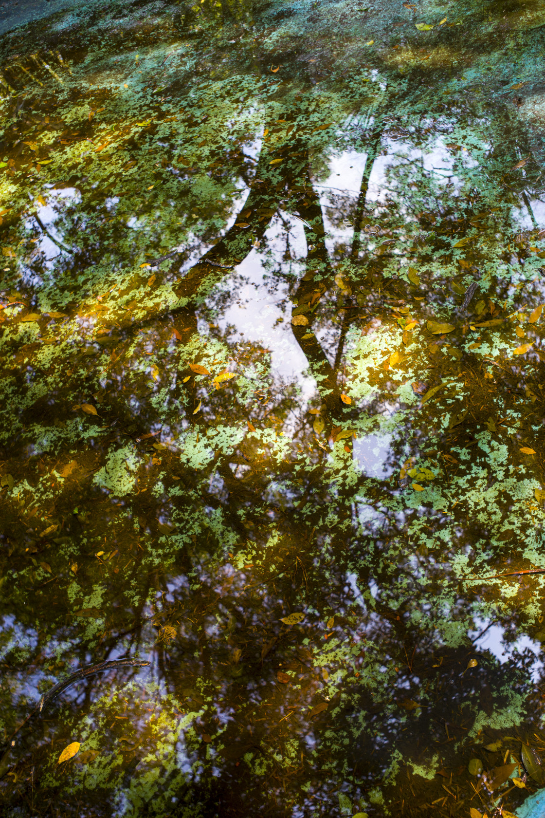 """Reflection of tree and leaves"" stock image"