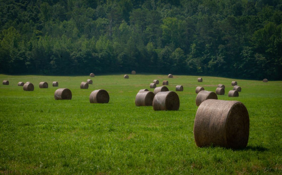 """Hay Bales on a Southern Farm"" stock image"