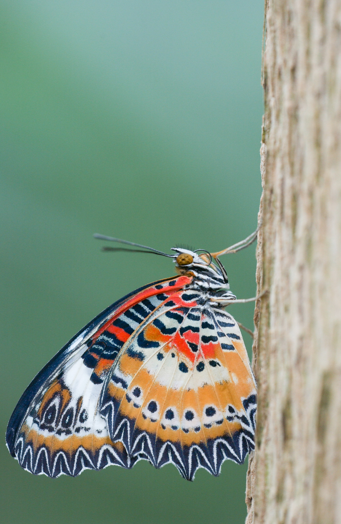 """Exotic butterfly at rest"" stock image"