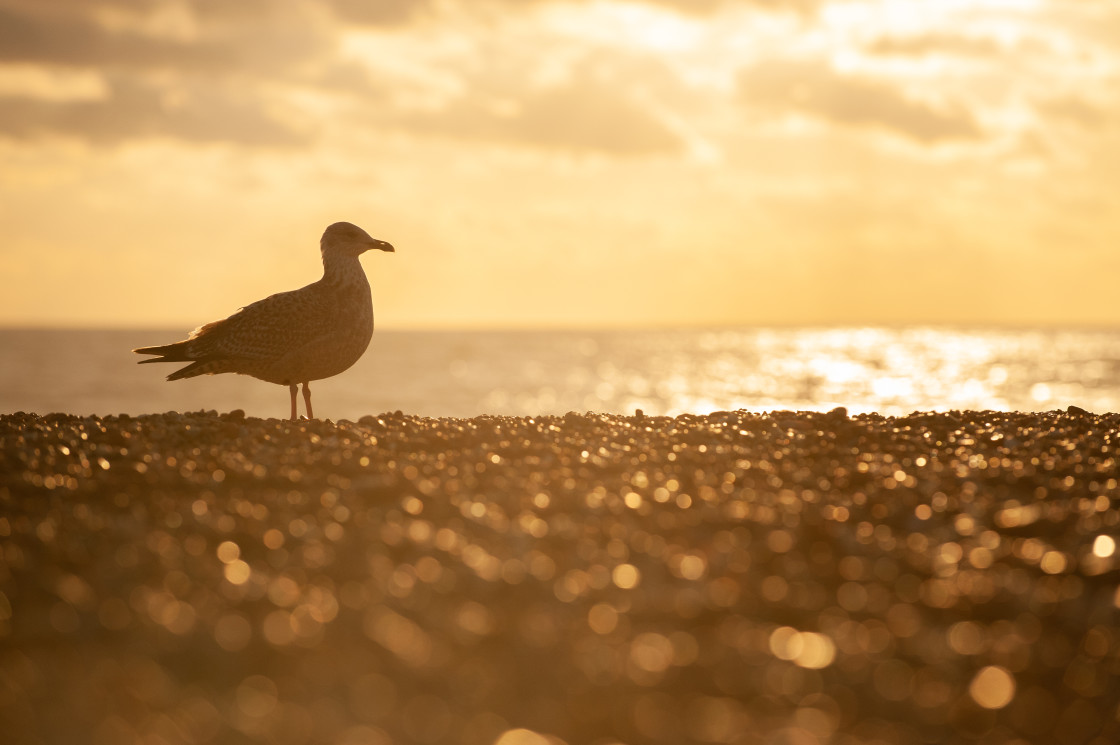 """""""Seagull on the Beach"""" stock image"""