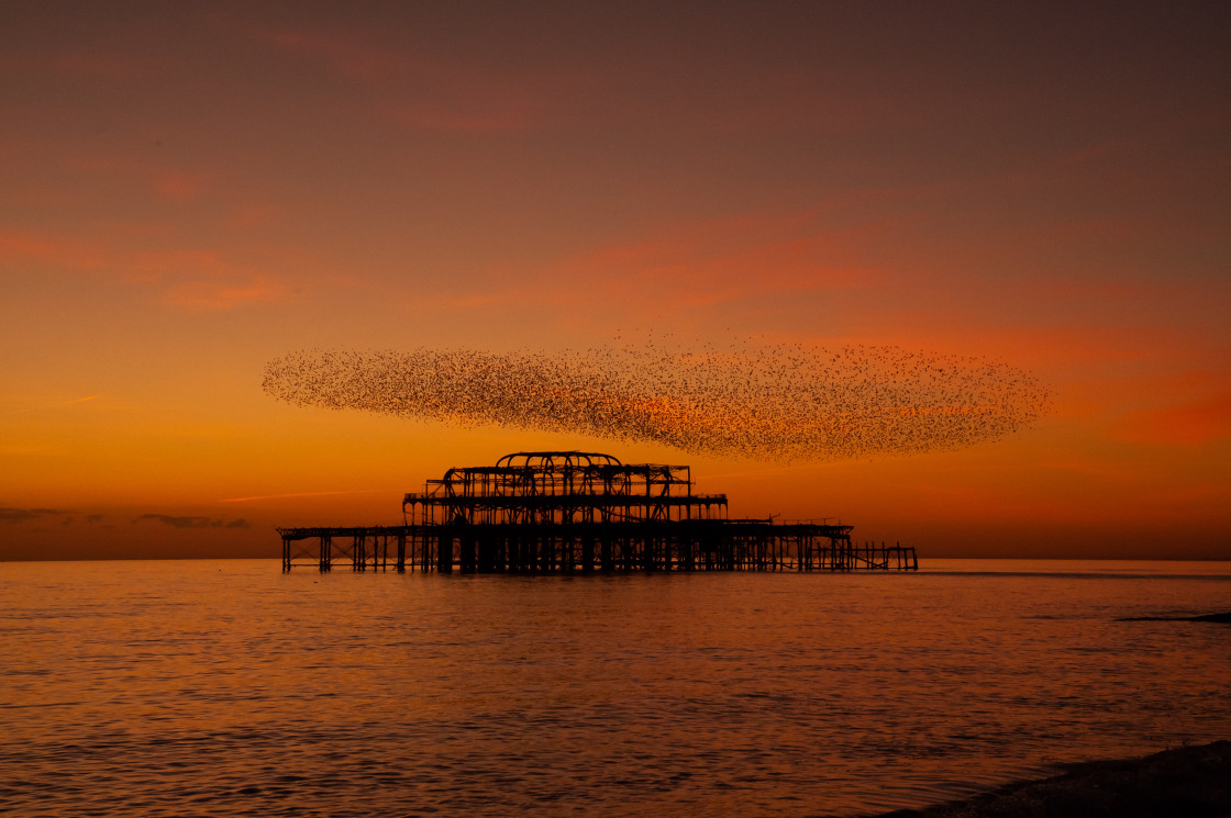 """Sunset, Pier, Murmuration"" stock image"