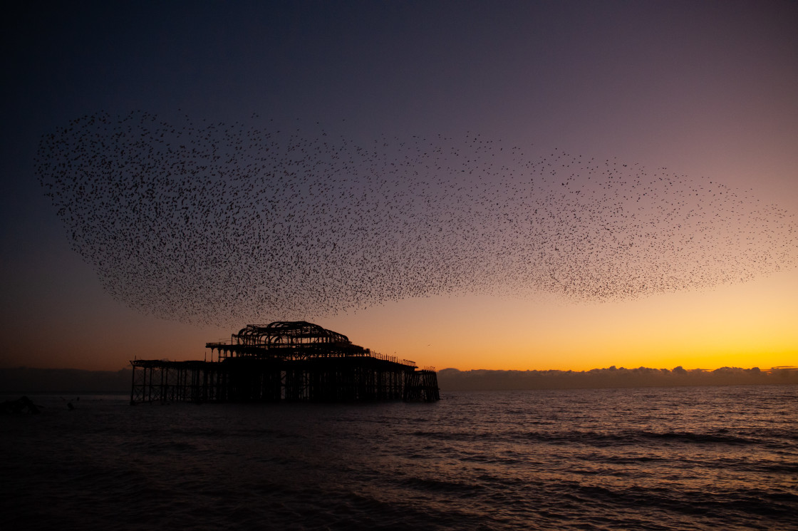 """Starling Murmuration over Pier at Dusk"" stock image"