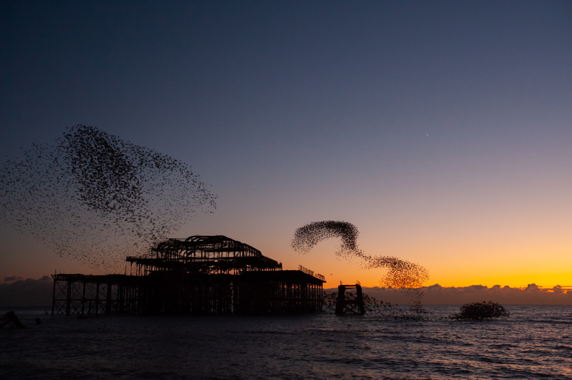 """Dusk and Starling Murmuration"" stock image"