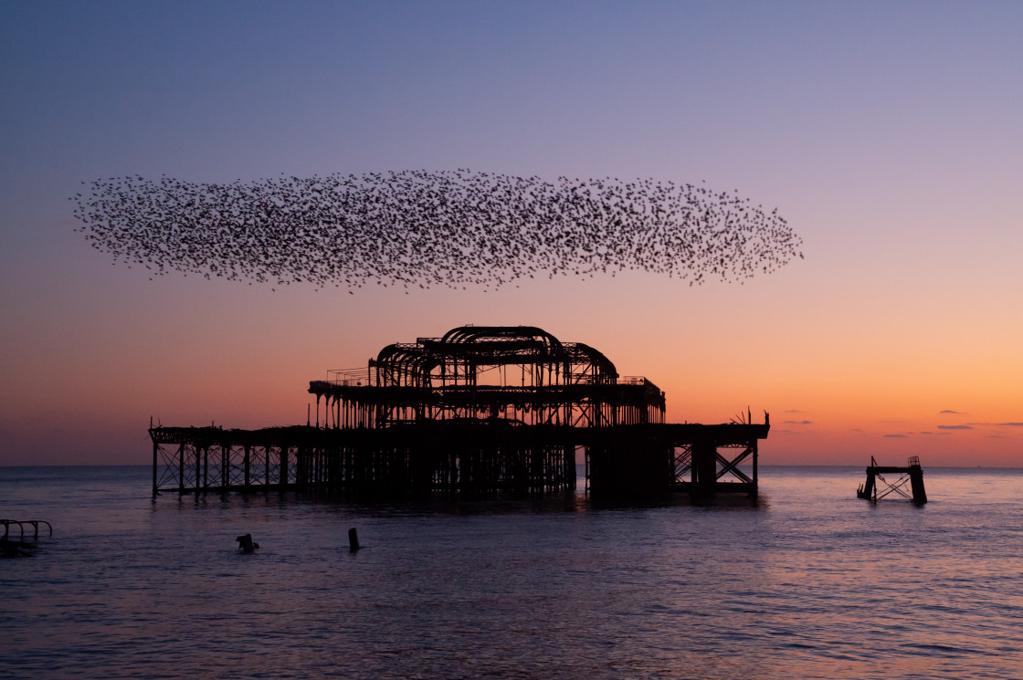 """Starlings over Pier"" stock image"