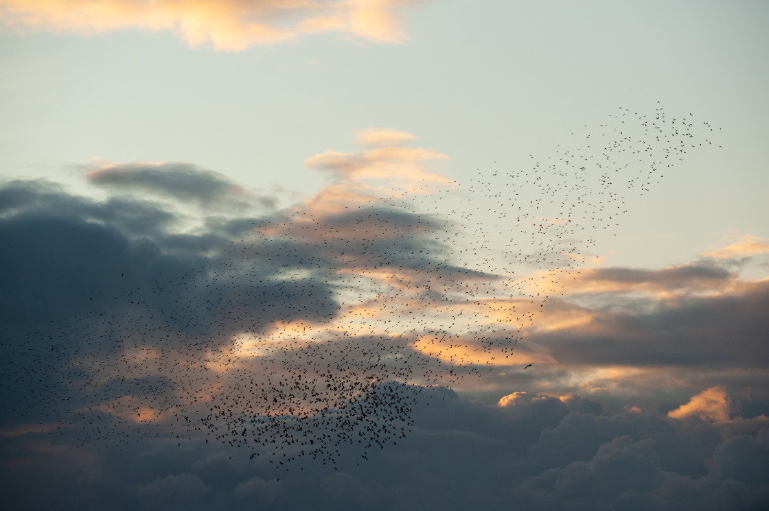 """Starlings Amongst The Clouds"" stock image"