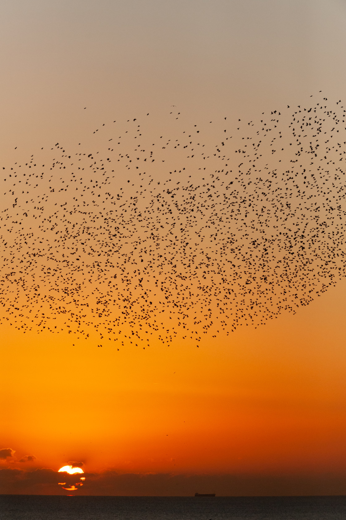"""Blazing Sun and Starlings"" stock image"