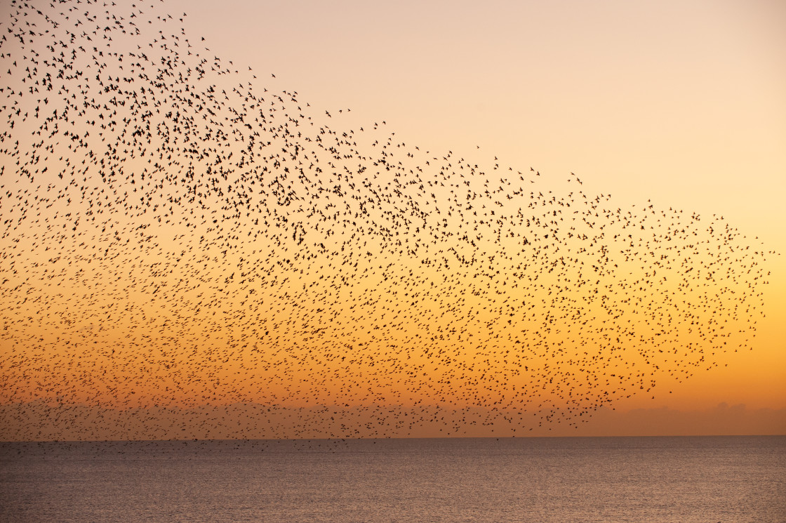 """Starling Wave over Sea"" stock image"