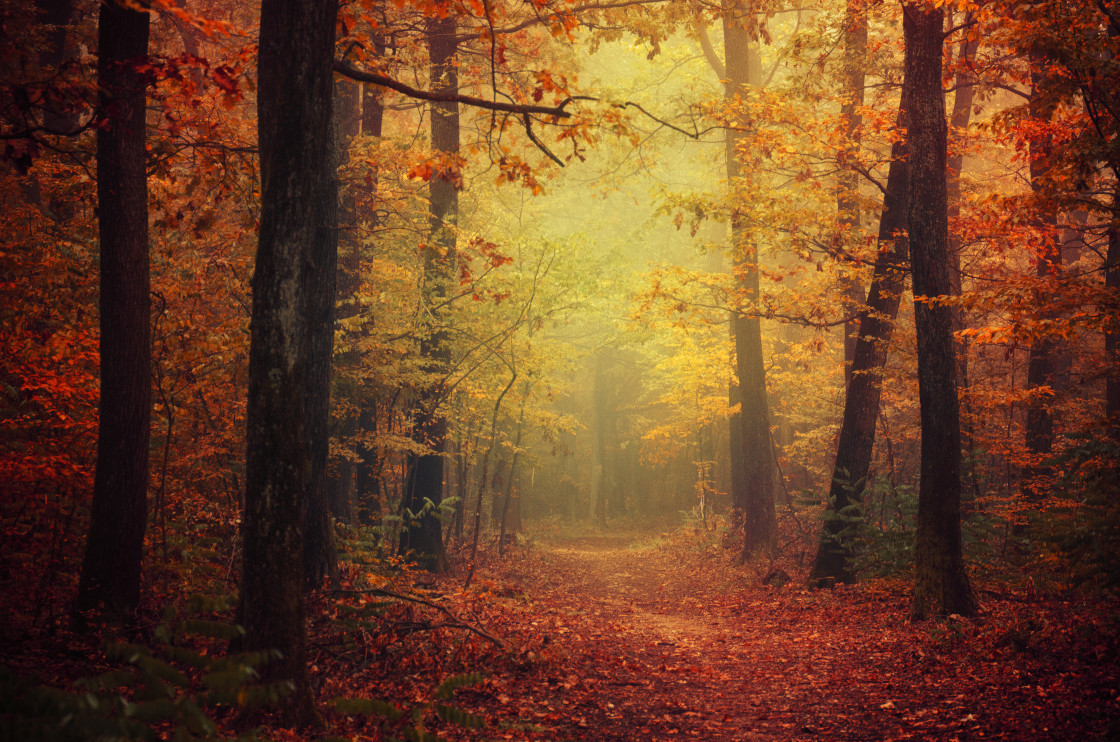 """Autumn Walk XLII."" stock image"