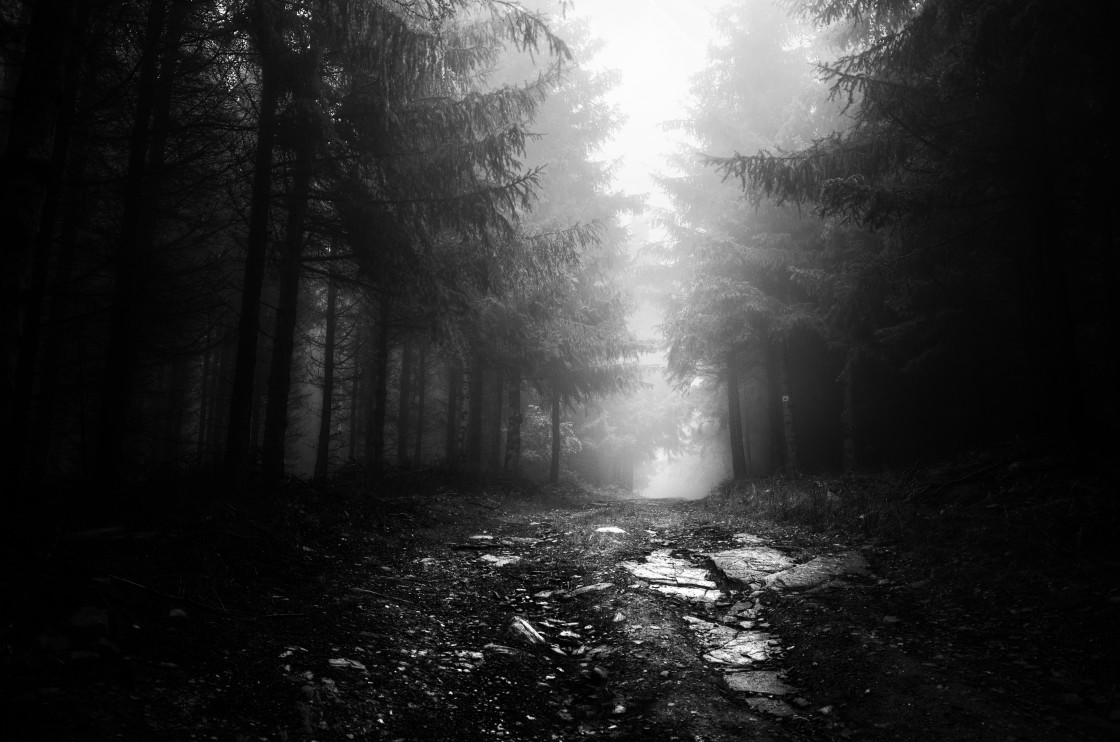 """""""If These Trees Could Talk XII. (BW)"""" stock image"""