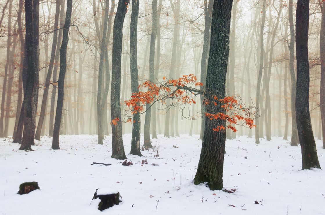 """Winter Woods X."" stock image"