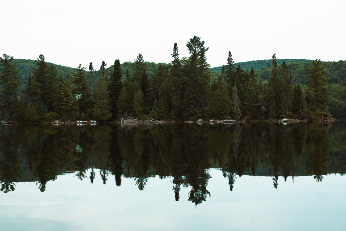 """""""Forest reflection"""" stock image"""