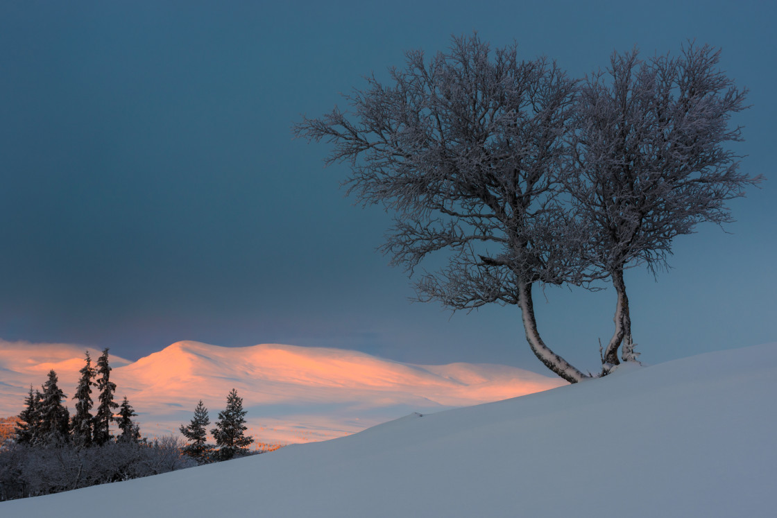 """Birch tree on snow covered hill"" stock image"