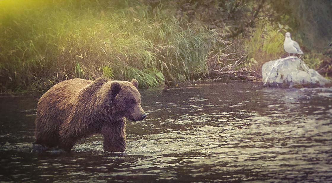 """Sunset Bear"" stock image"