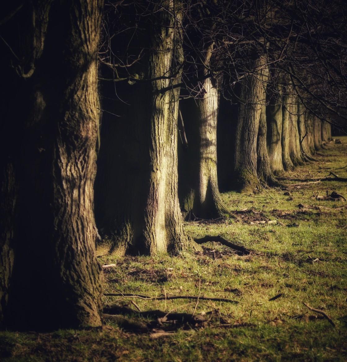 """""""Dark Avenue of trees"""" stock image"""
