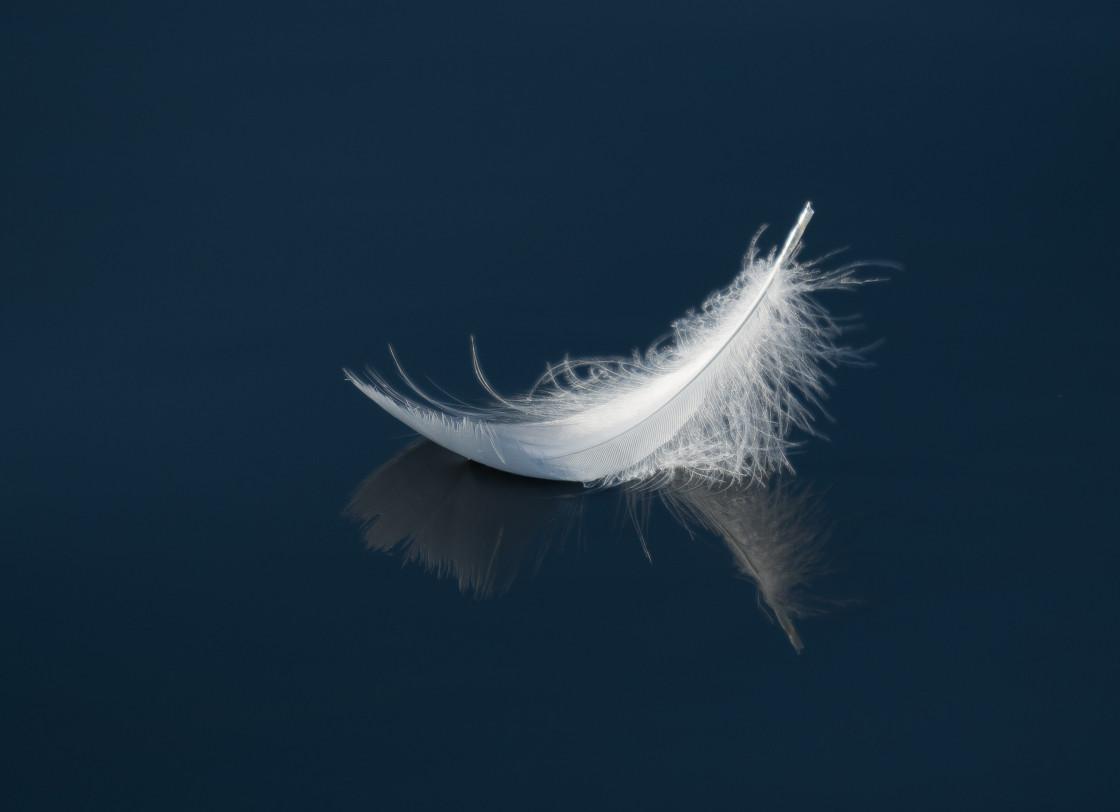 """White Feather"" stock image"