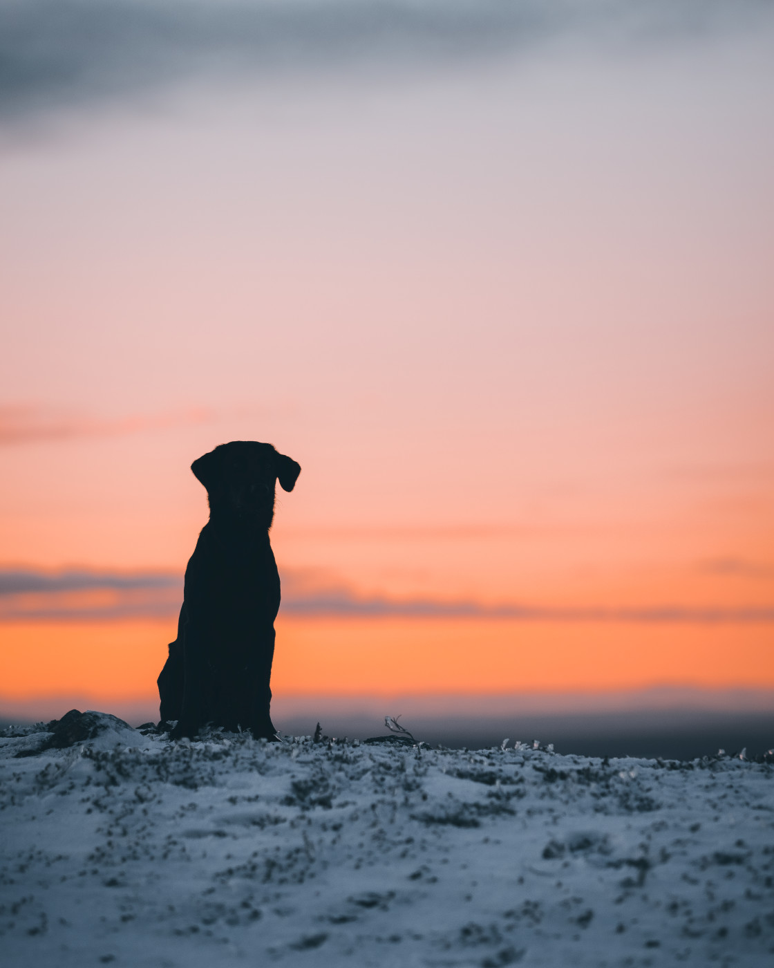 """""""Sunset dog"""" stock image"""
