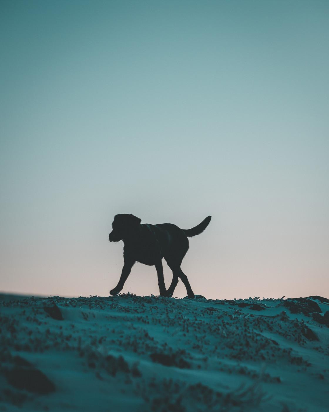 """""""Dog Walk"""" stock image"""