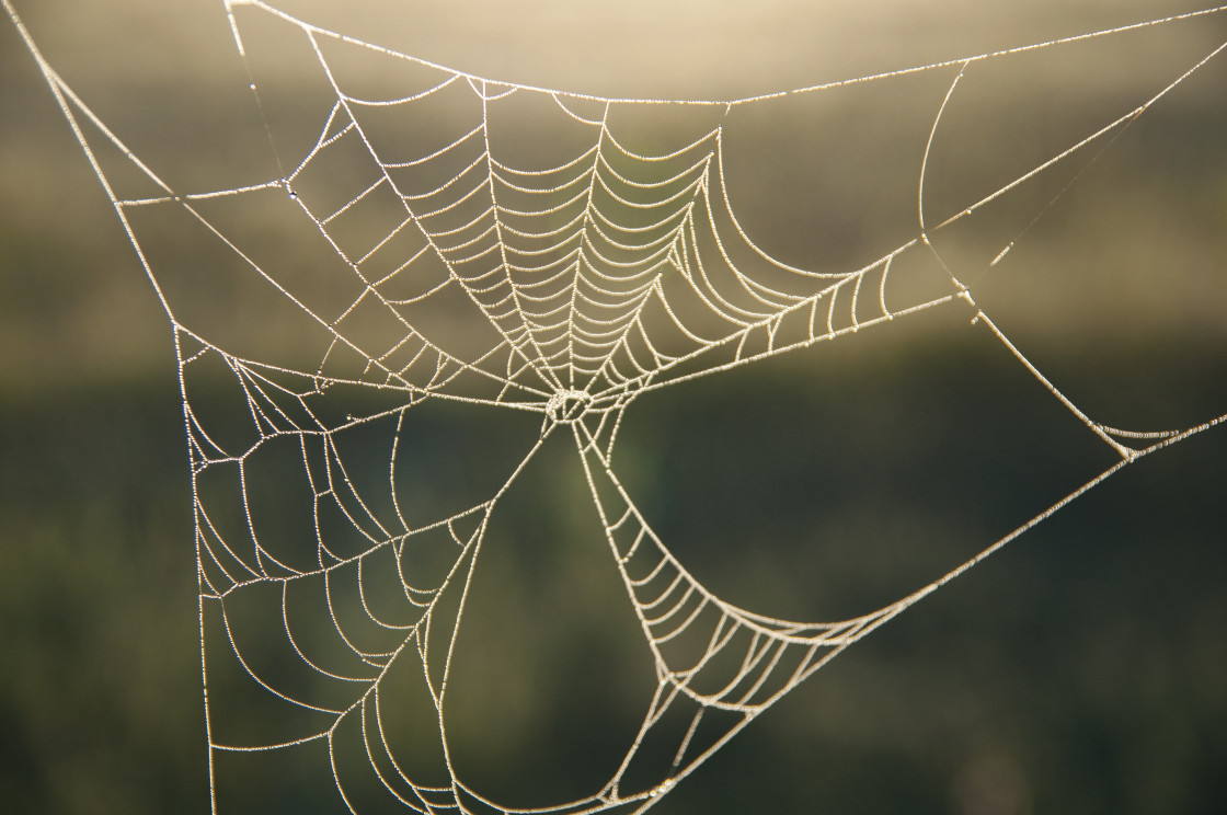 """""""Spider Web close up"""" stock image"""
