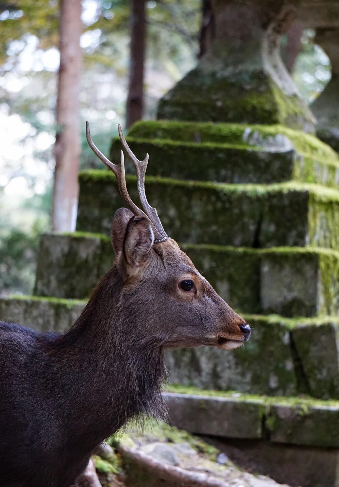 """Nara"" stock image"