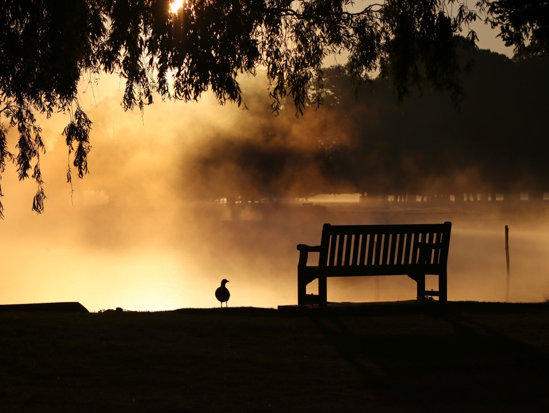 """""""Waiting for dawn"""" stock image"""