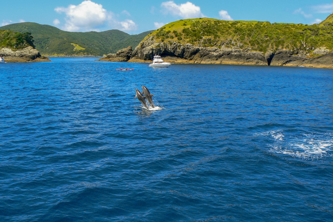 """""""Dolphins jumping in the sea"""" stock image"""